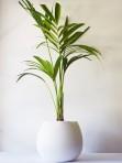 Organic Palm X Large