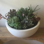 Mixed Succulent Bowl White