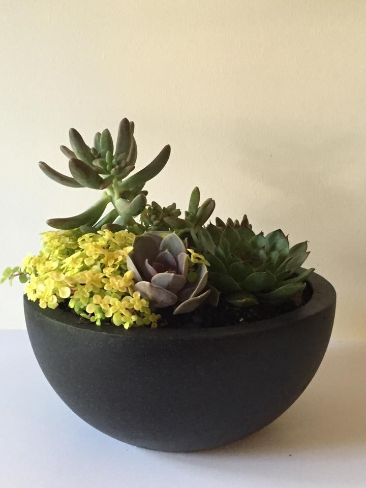 Mixed Succulent Bowl Black