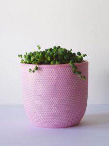 pink-dimple-peas