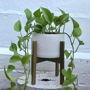 Medium Table Planter