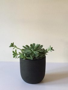 Smal Tweed Succulent