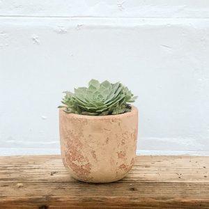 small terracotta