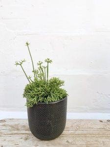 Tweed Black Large Rhipsalis