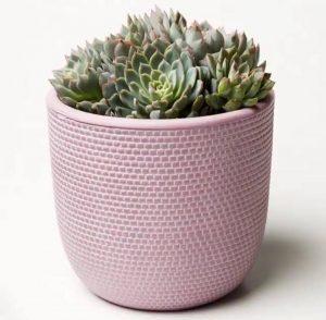 Pink Succulent Tweed
