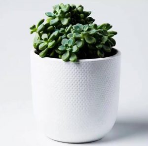 White Succulent Tweed